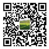 网站建设微信咨询